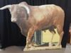 bull-stand-up-504-20