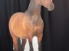 horse-right-stand-up-504-24