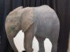 elephant-stand-up-125-224